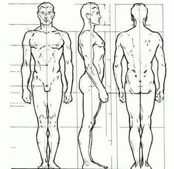 Пропорции тела человека для художника