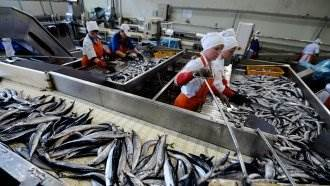 По рыбокомбинату «Островной» на Шикотане возбудили четыре новых уголовных дела