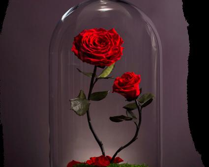 Где купить долговечные глицериновые розы