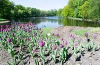 Тюльпаны на Елагином острове фото