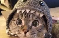 Звезда Инстаграма кошка Нала фото