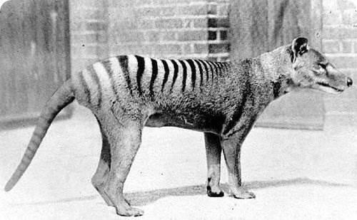 Вымершие виды животных