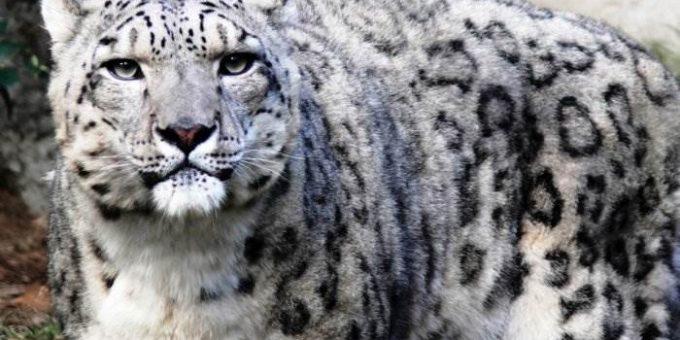 Исчезающие животные по вине человека