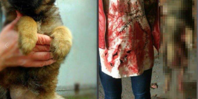 В Хабаровске девушки-живодёры мучили животных