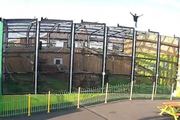 Неизвестный проник в зоопарк и выпустил на волю сурикатов Новости в фотографиях,Англия,животные,зоопарки,новости,сурикаты