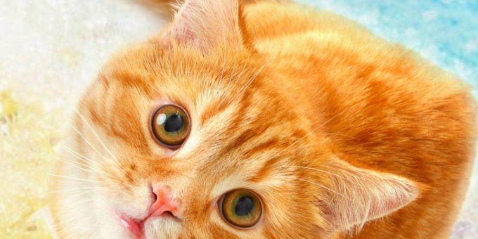 Всемирный день кошек 8 августа красивые картинки