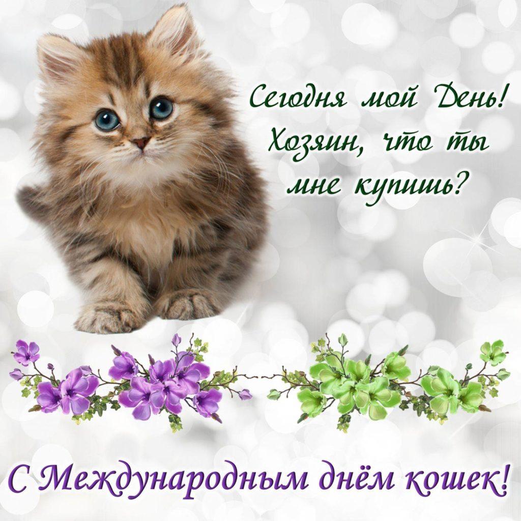 Картинки поздравления всемирный день кошек, надписями