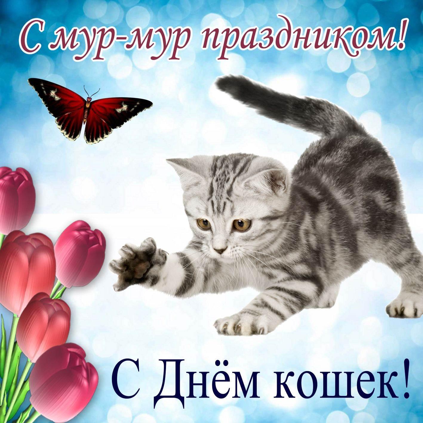 поздравления к дню кошек неоднократно запрещал жене