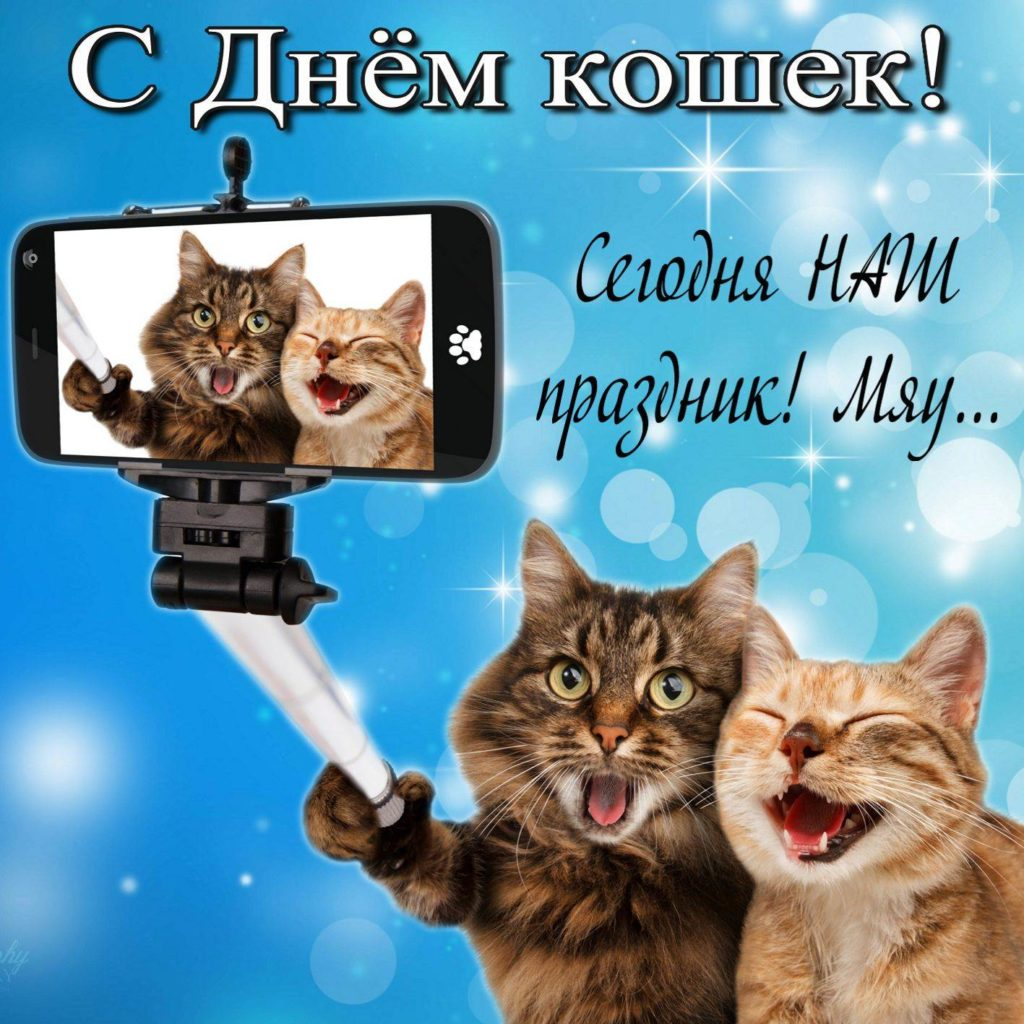 Поздравлением, картинки к дню кошки