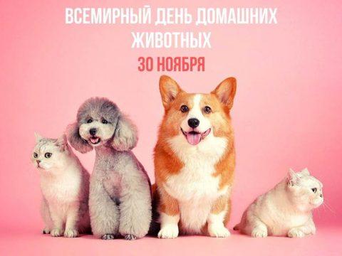 Всемирный день домашних животных картинка