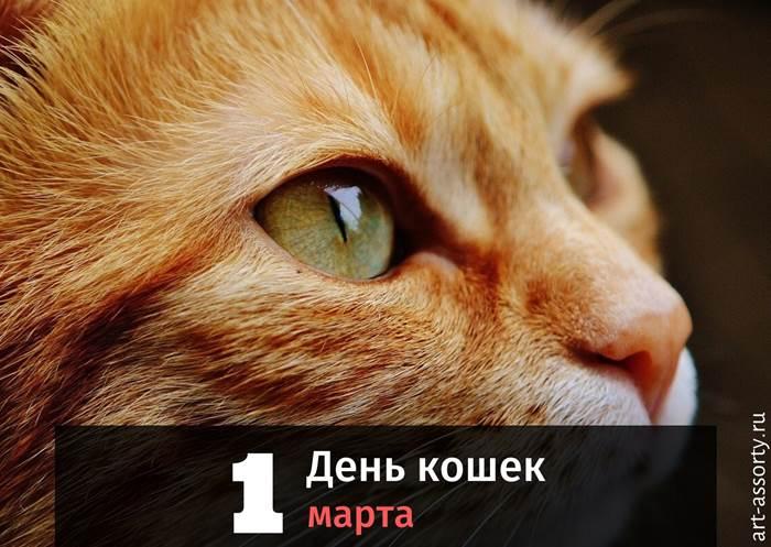 День кошек картинка