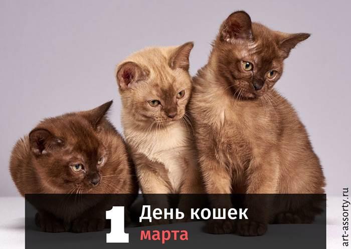 День кошек поздравление