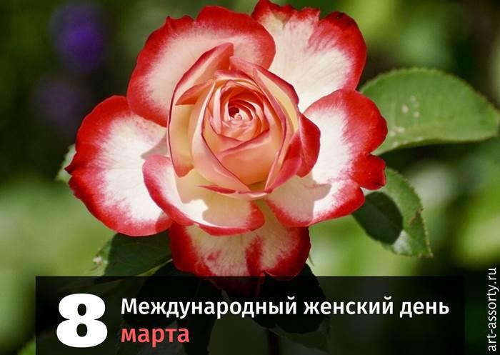 Международный женский день картинка