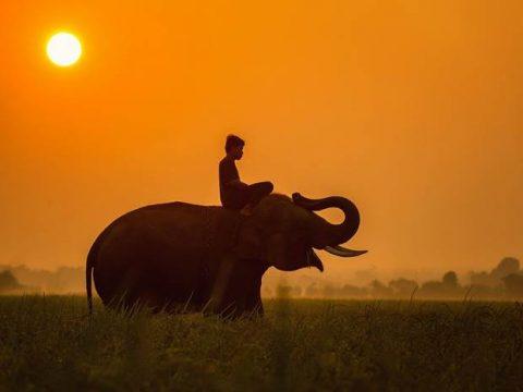 Тайланд слон фото