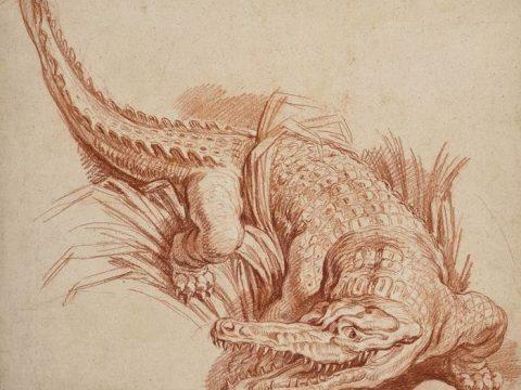 Франсуа Буше крокодил рисунок