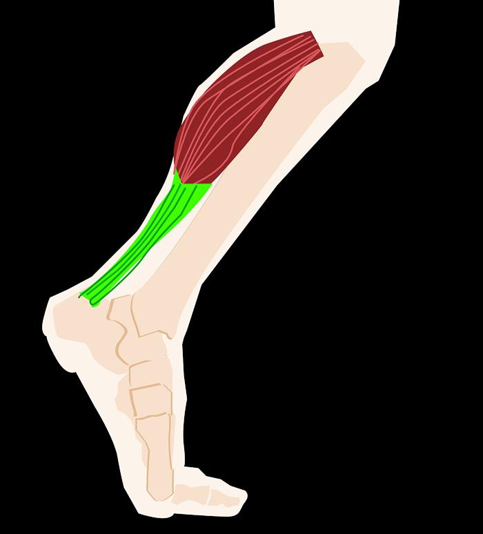 Икры ног картинка