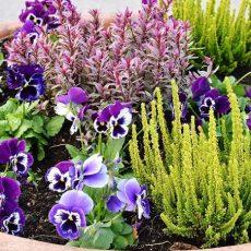 Ландшафтный дизайн цветников и клумб