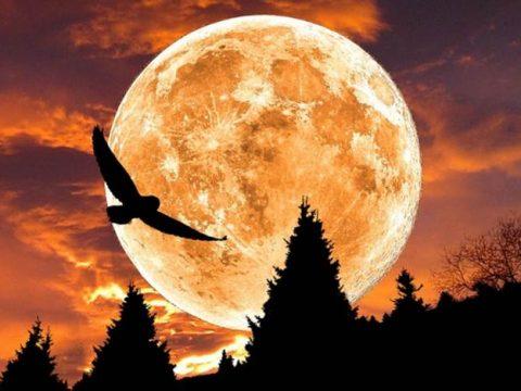 Лунный календарь благоприятные дни