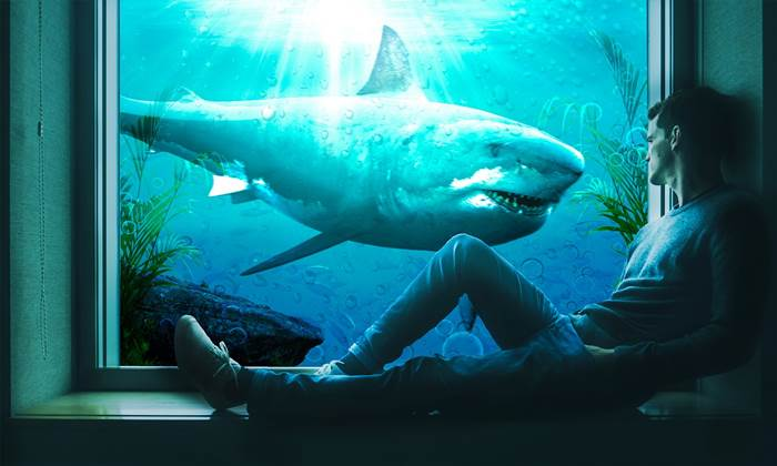 Акула и мужчина