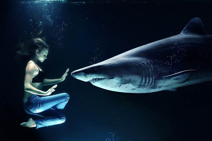Акула и девушка