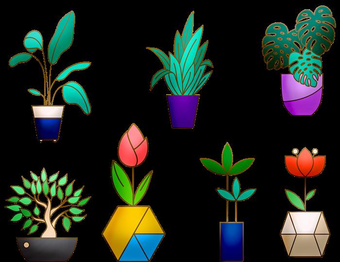 Комнатные растения картинка