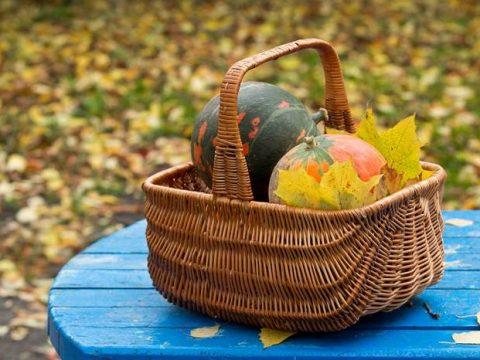 Осенний урожай в корзинке