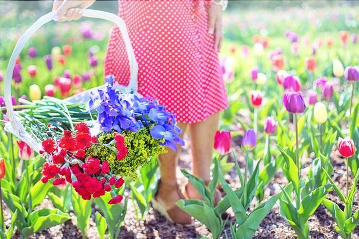 Цветущий сад с тюльпанами