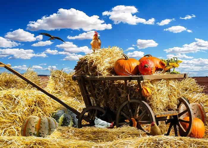 Урожайная осень