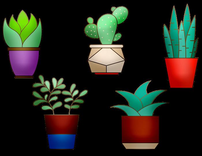 Домашние растения рисунок