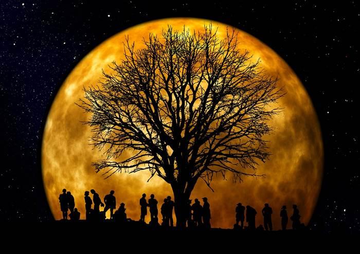Дерево на фоне Луны