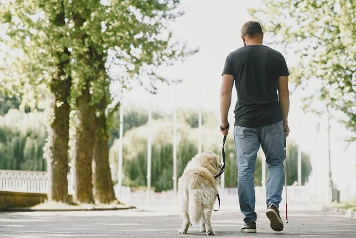Слепой человек с белой тростью и собакой поводырём
