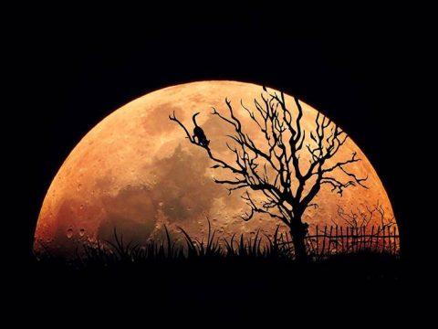 Кошка на фоне Полной Луны