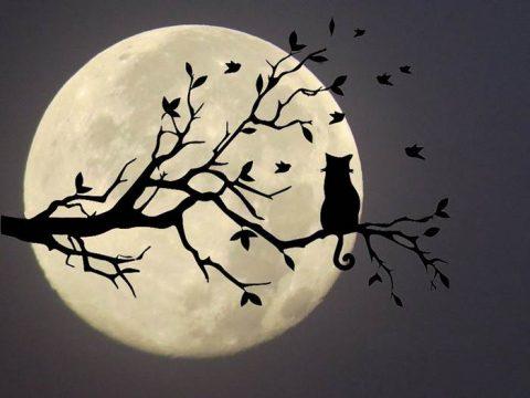 Благоприятная Луна в ноябре