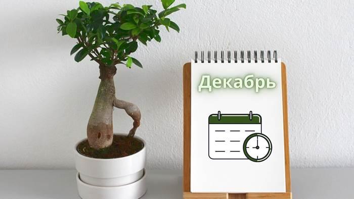 Календарь комнатных растений на декабрь