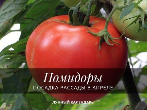 Посадка рассады помидор в апреле лунный календарь