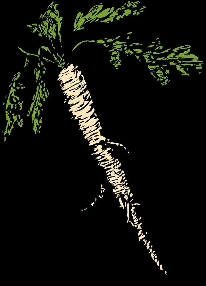 Хрен корень