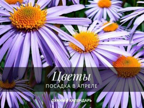 Цветы посадка в апреле