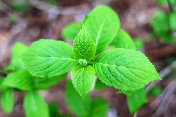 Посев растений