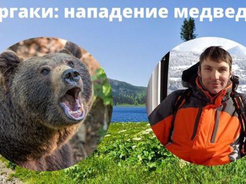 Ергаки нападение медведя